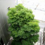 特別養護老人ホーム特巣-既存木を生かす