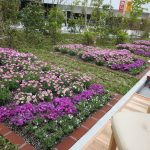 JRおおいたシティ屋上庭園-03