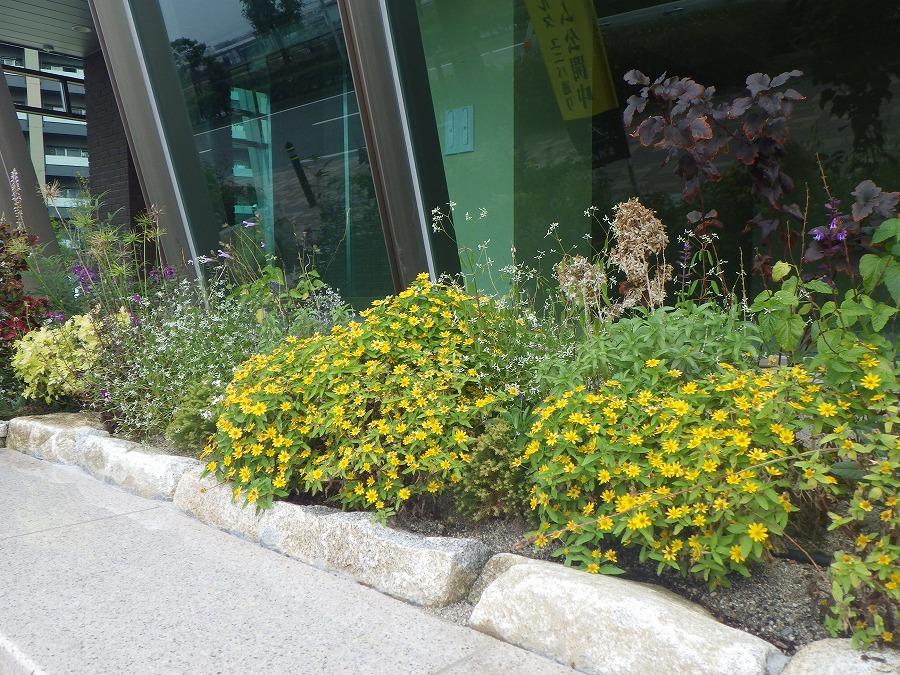 モントーレ・ラ・コルタ ユニバ通り コミニティ施設前花壇 -01