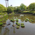 大幅な池さらえで見違えようにきれいになりました